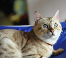 кошка любмое животное екатеринбуржцев